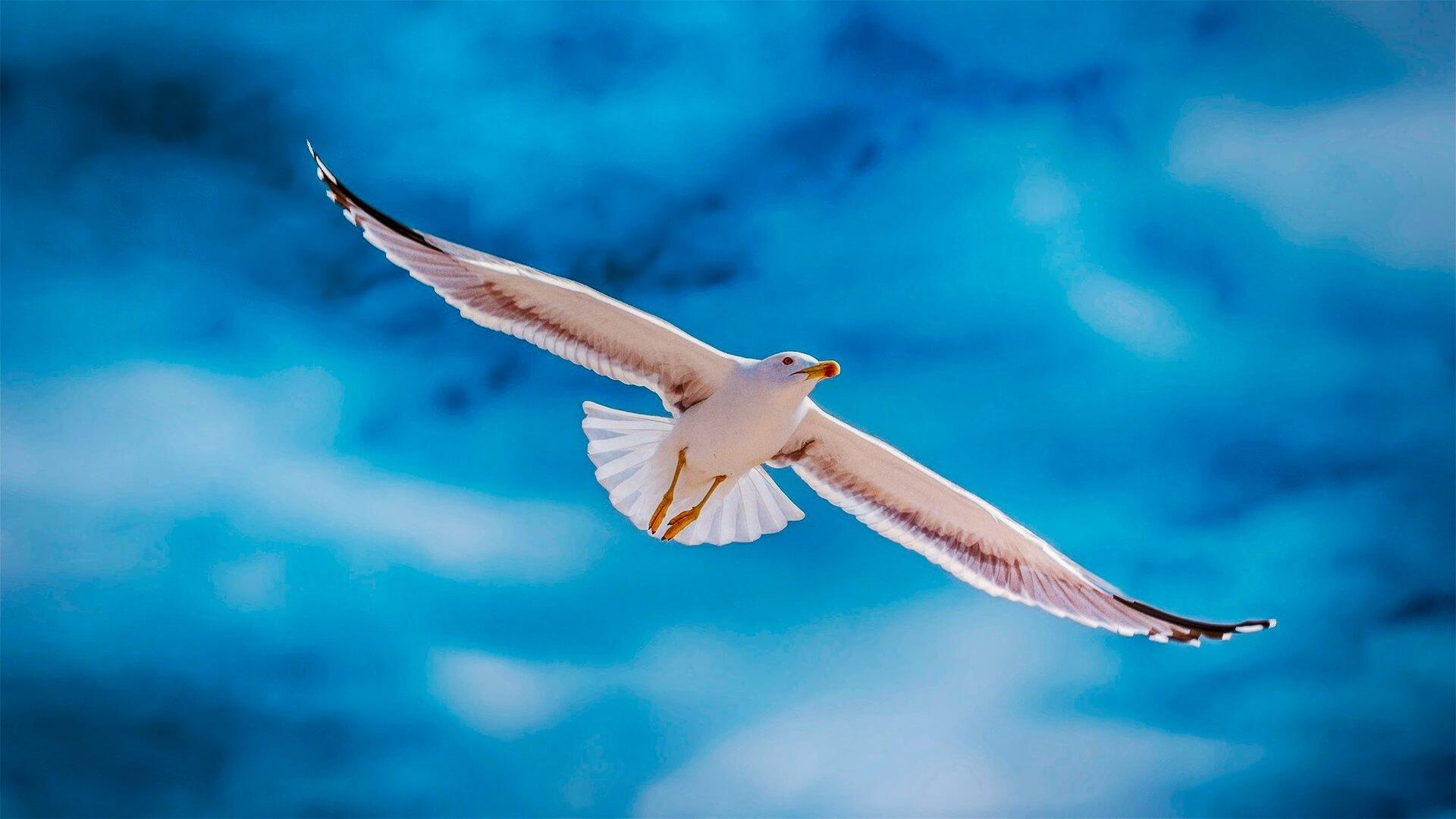 Siamo nati per volare